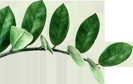 banner leaf1